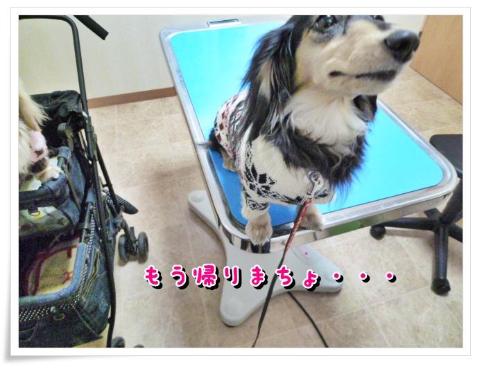 2_20111221145336.jpg