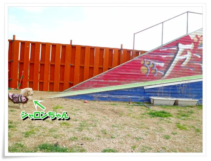 4_20111212150845.jpg