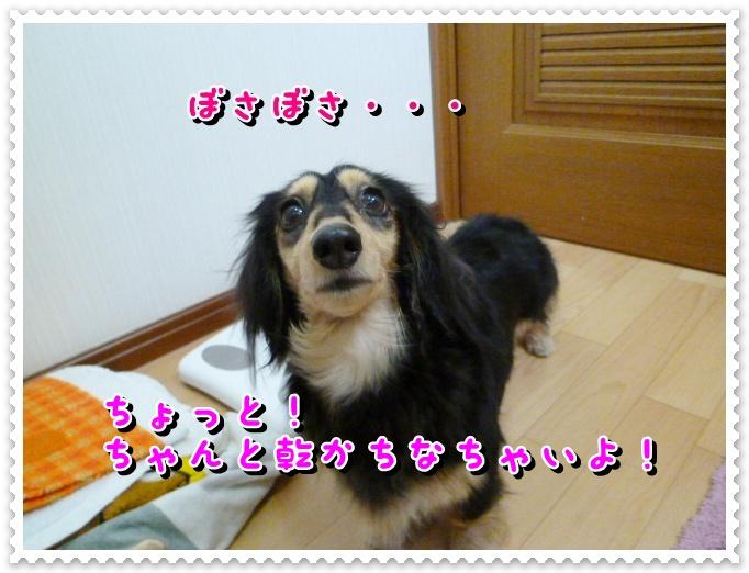 5_20120319105350.jpg