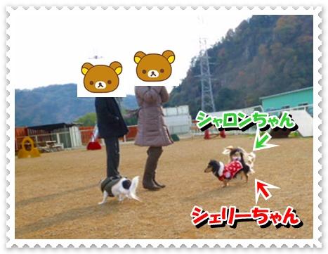6_20111212150844.jpg