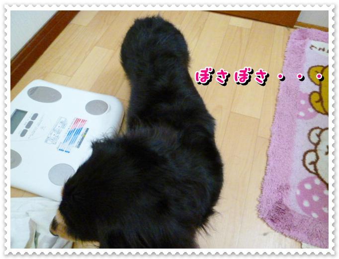 6_20120319105350.jpg