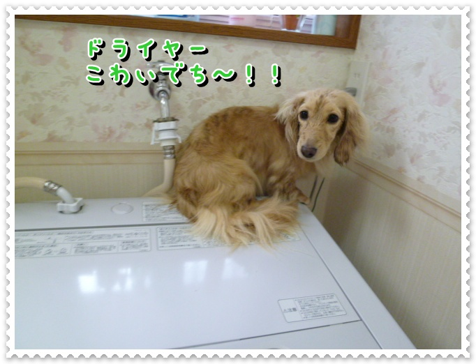 9_20120319105437.jpg