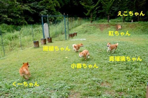 DSC_0067_20110823153236.jpg