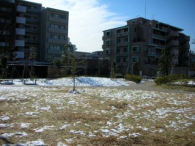 雪の数日後