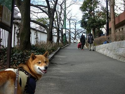 歩き易い道