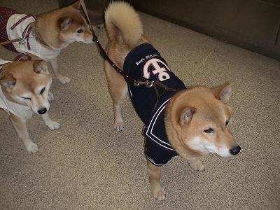 犬OKのエレベーター