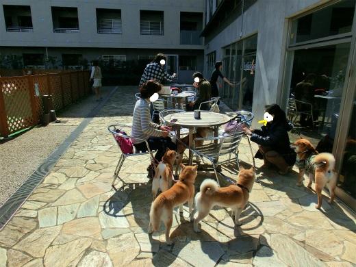 ダップルバックカフェ