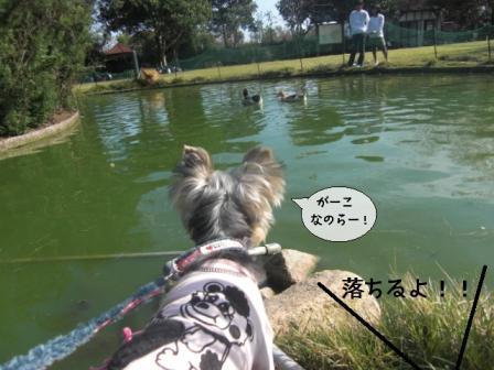 chikura2.jpg