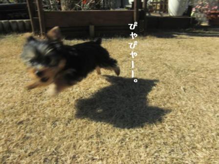 shichigo.jpg