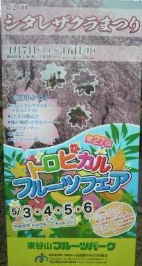 フルーツパーク桜祭り看板