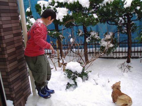 ブログ画像 リサイズ大雪1