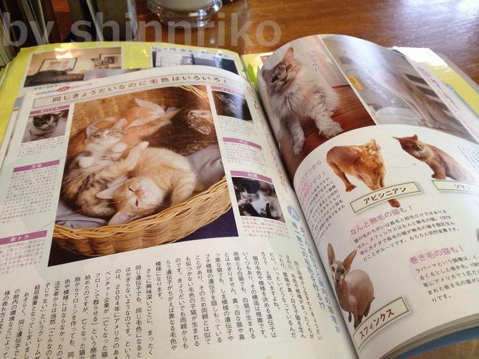 左の写真がポロン亭の猫ちゃん達