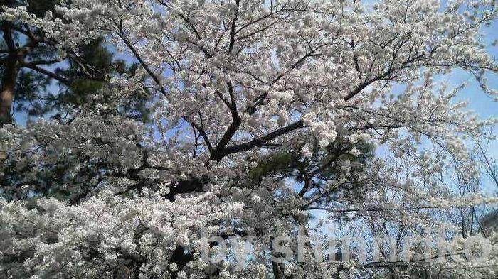 美しい春の花に導かれる