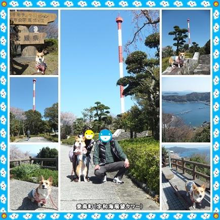 宇和海展望タワー(1)
