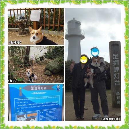 cats2_20120405160151.jpg