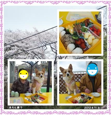 cats_20120407213206.jpg