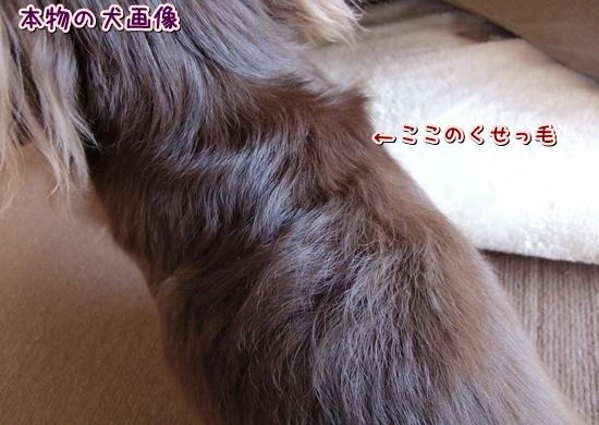 CIMG7058_R.jpg