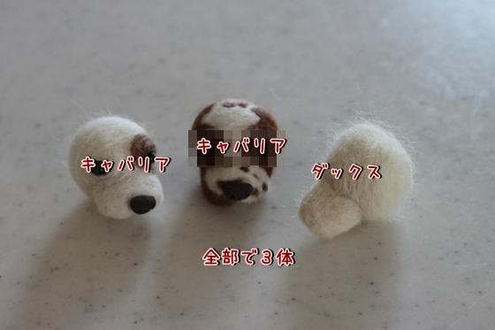 IMG_8553_R.jpg