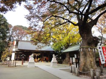 黄葉になりつつあったので久しぶりに新田神社を撮影してきました。