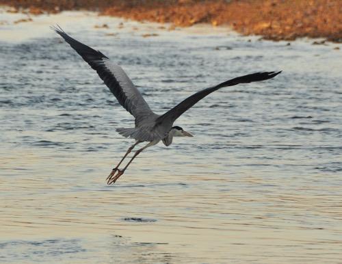 th_bird4_201411300808305f5.jpg