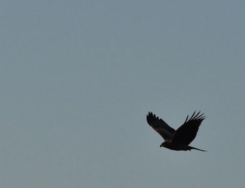 th_bird_20141130080826585.jpg