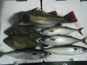 4鮮魚セット11.30