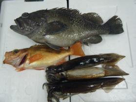 2鮮魚セット11.30
