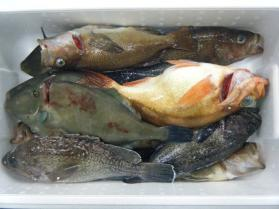 1鮮魚セット11.30