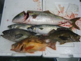 9鮮魚セット11.30