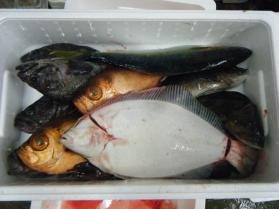 2鮮魚セット12.3