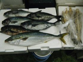 6鮮魚セット12.5