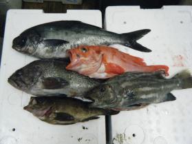 4鮮魚セット12.5