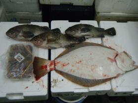 5鮮魚セット12.5