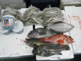 15鮮魚セット12.5
