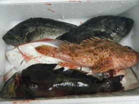 2鮮魚セット12.10