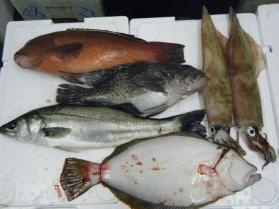 1鮮魚セット12.10