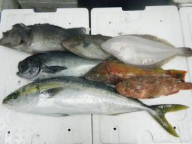 6鮮魚セット12.12