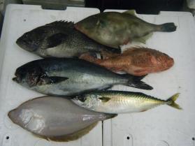 5鮮魚セット12.12