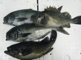 4鮮魚セット12.12