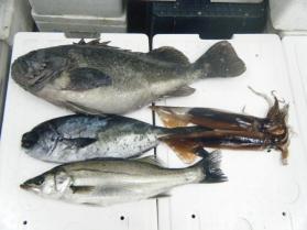 3鮮魚セット12.12
