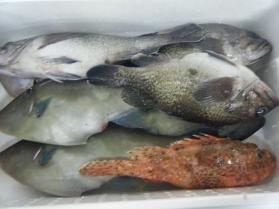1鮮魚セット12.12