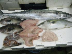 8鮮魚セット12.12