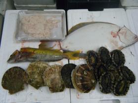 7鮮魚セット12.12