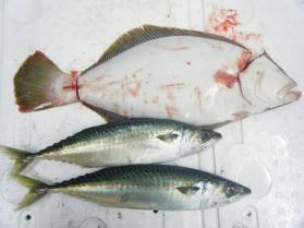 14鮮魚セット12.12
