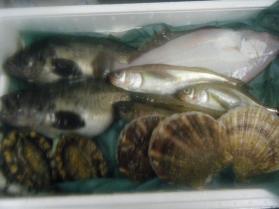 19鮮魚セット12.12