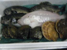 20鮮魚セット12.12