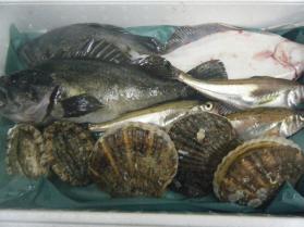18鮮魚セット12.12