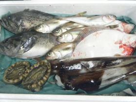 17鮮魚セット12.12