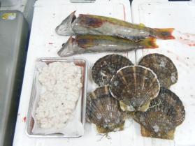 5鮮魚セット12.13