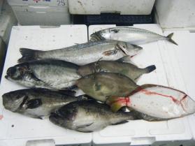 3鮮魚セット12..13